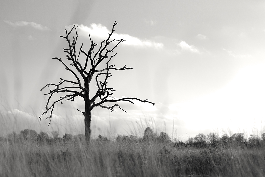 Boetelerveld, Mariënheem